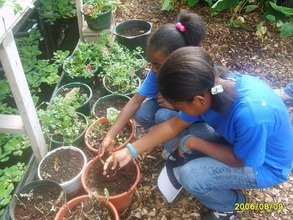 Youth farming
