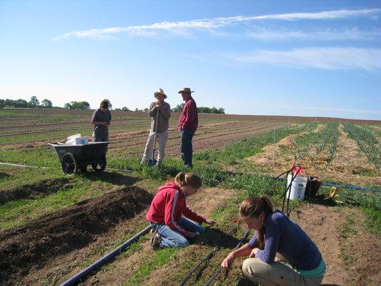Planting Crew at Amador Hill