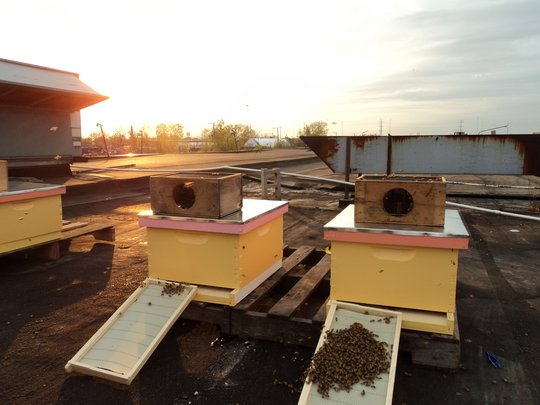 bee hives at sunset.