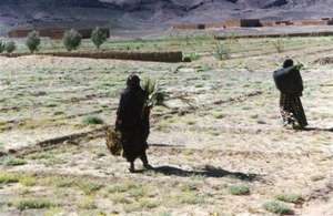 Distributing trees to women - Tafraoute 2003