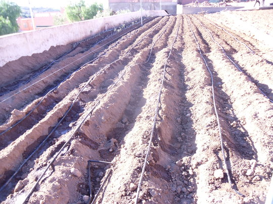 Irrigation Systems for Fruit Tree Agriculture