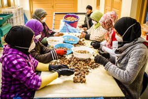 Workers shelling HAF-HA3 organic walnuts