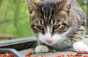 National Feral Cat Day (Oct 16) spay/neuter events