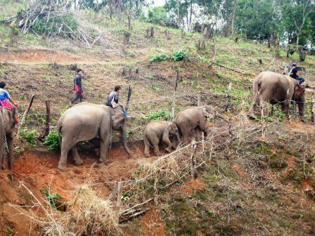 Responsible Elephant management