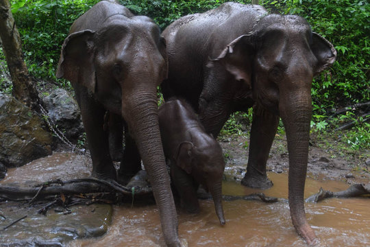 Our 3 generations of elephants enjoying the rain