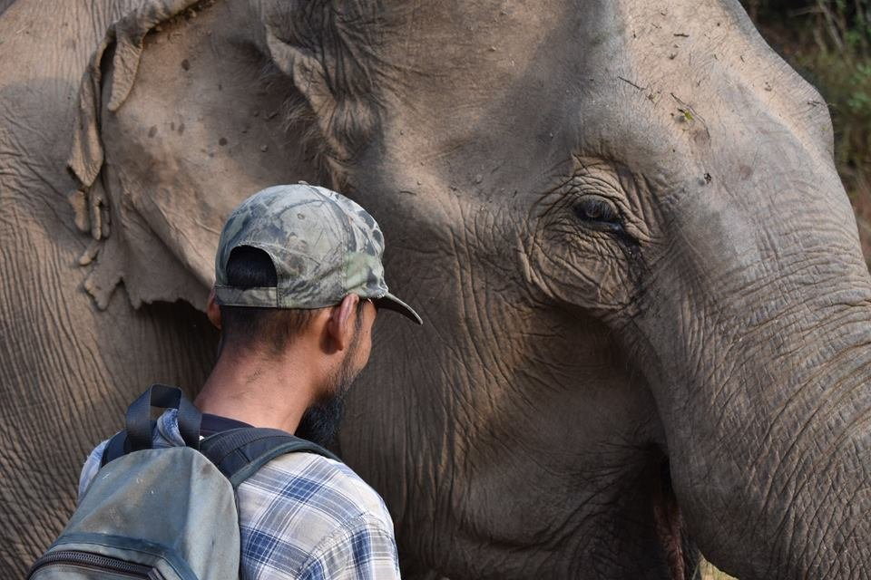 Protecting Rescued Elephants in Thailand