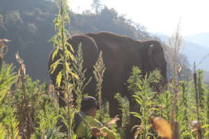 At the Ground Level - Kum Suk and Mahout Wynn