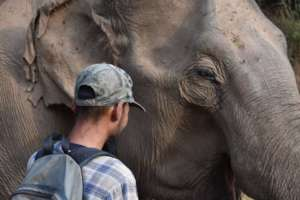 Kum Suk and Mahout Root Staring Contest