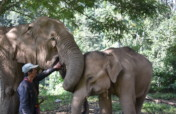 Alternative Livelihoods & Elephant Rescue Thailand