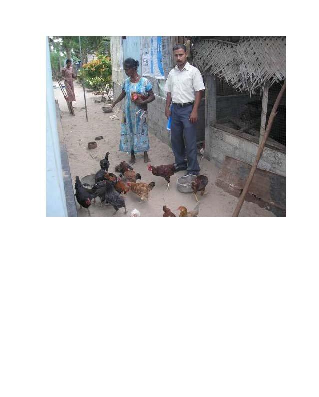 Mrs. Sivamala feeds her chickens