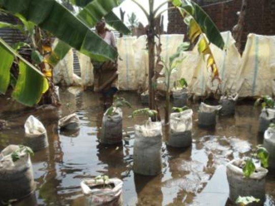 CERI Foster Home Garden Flooded