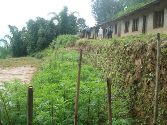 Nursery established in Kalidhunga for Greenary
