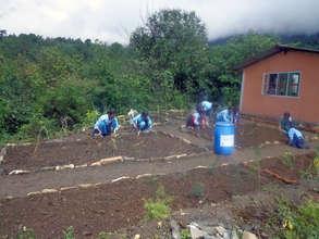 Student developing Herbal Garden in Majhgau School