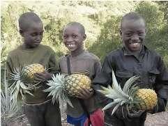 Sustainable Irrigation for Rwandan Orphanage