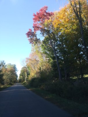 The beginnings of fall color