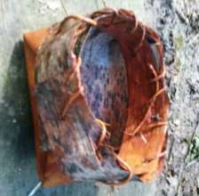 Make Birch Bark baskets that hold water