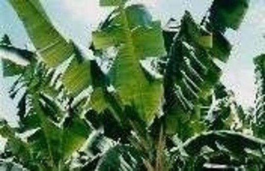 Agroforestry, Community Development & Biodiversity