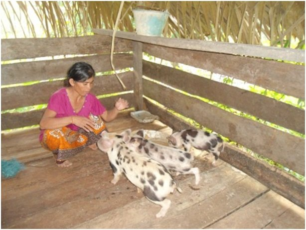 Wife of a SHG member feeding their piglets, Kroach