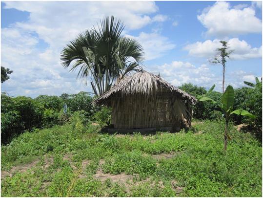 Sophat's land farm in Prey Kou village