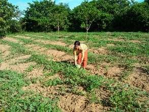 Watermelon farm in the village