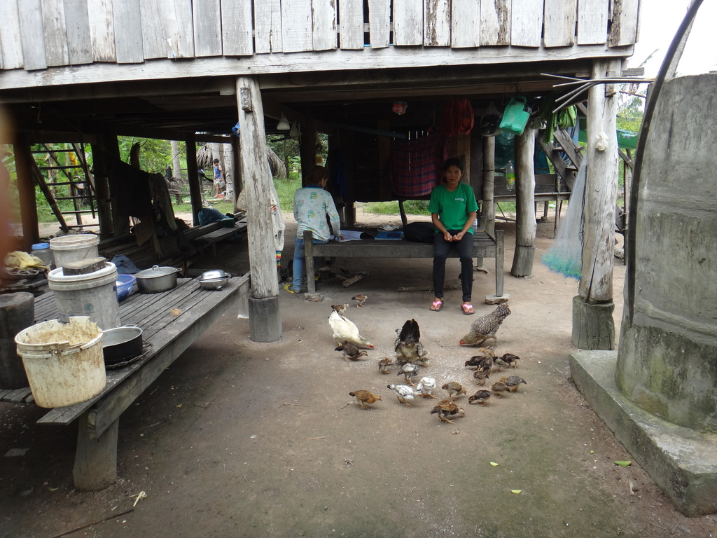 Sophoeun feeding her chickens in her house yard