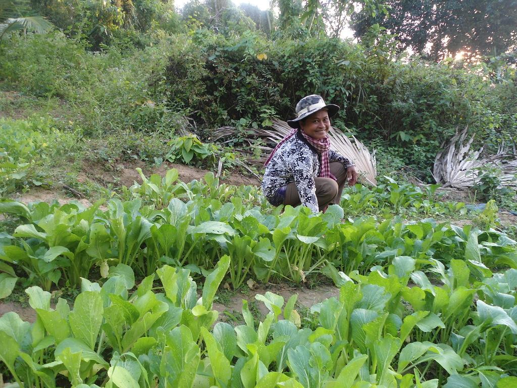Vegetable growing activity