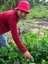 Srey Phoom in her 'chamkar' (plantation)