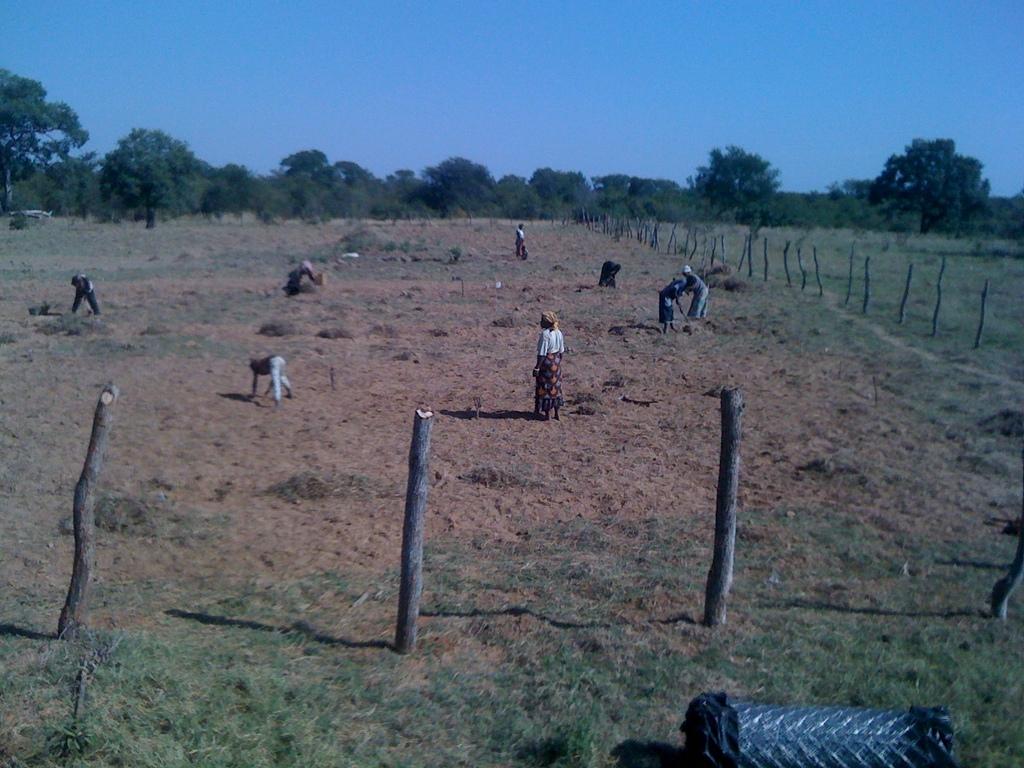 Sibunimba Village preparing the field