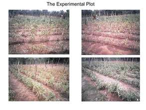 The Irrigation Experiment