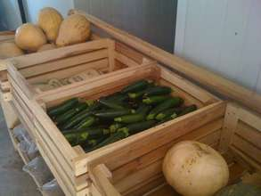 Our squash for sale in Livingstone
