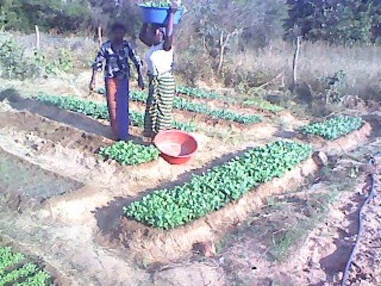 Nursery for rainy-season gardening