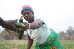 Clean water, thriving gardens: Zambian Abundance!