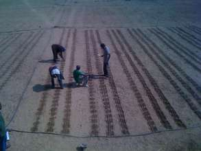 Seeding beetroot and squash in Sibunimba