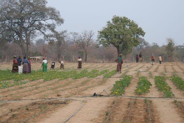 Sibunimba Village garden