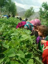 Crop distribution to orphaned children
