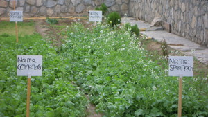 BCG -- a sustainable way to feed Afghan orphans
