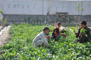 our children's garden in Baharak