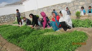 our thriving children's garden