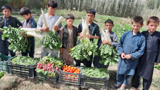 our boys and their produce!