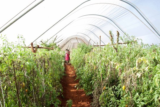This garden brings nutrition to 250 students
