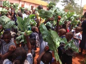 kale harvesting