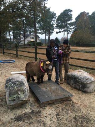 Pony in North Carolina