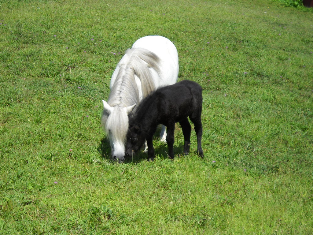 Spring means new Foals