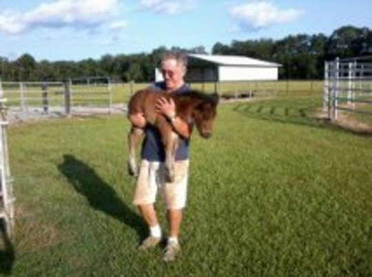 Late Edition being carried- first foal 2012