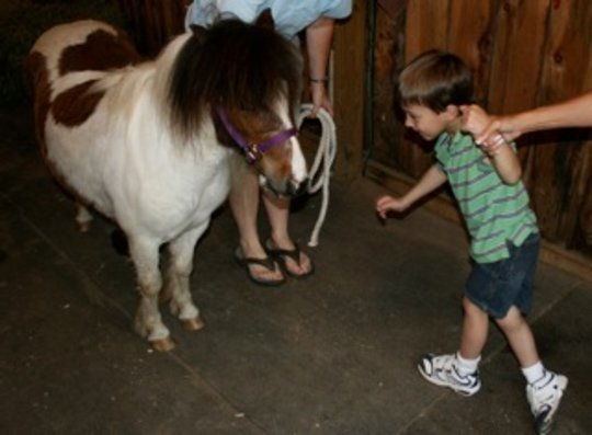 Mathew Meets his Pony for the first time