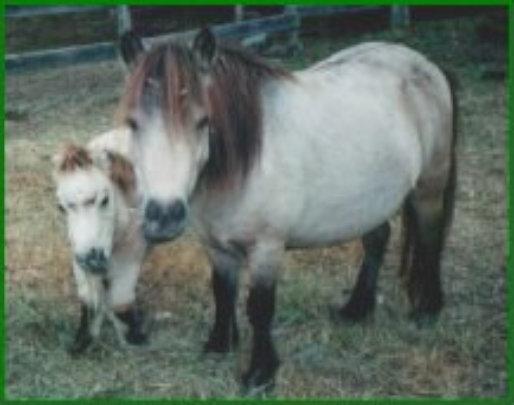 Petoot and Rainie (mom)