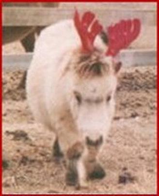 Petoot the Reindeer