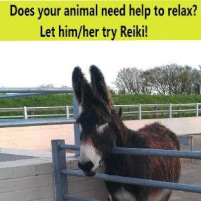 Pony Stress