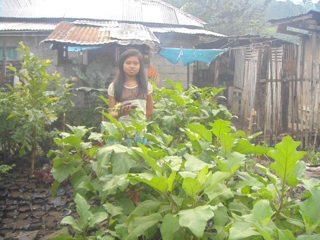Harvesting from vegetable garden