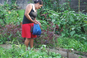 Vegetable harvesting